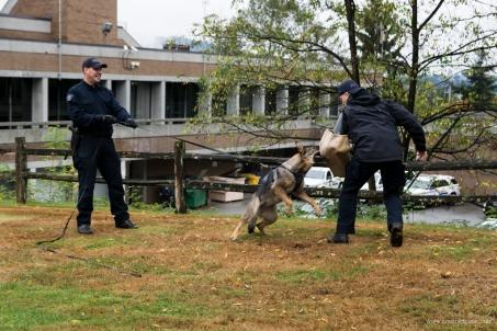Burnaby RCMP Police Dog Services Demo